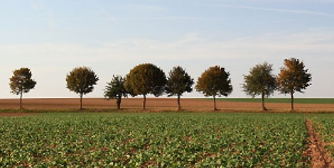 <span>Harvest:</span> 六月 - 七月